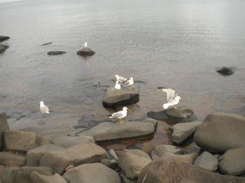 Duluth shore